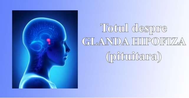 Glanda hipofiza si rolul ei in organism