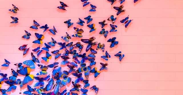 Camera cu fluturi