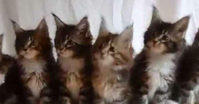 Video: 7 Pisicute si toate dragalase. Viralul care iti va aduce zambetul buze