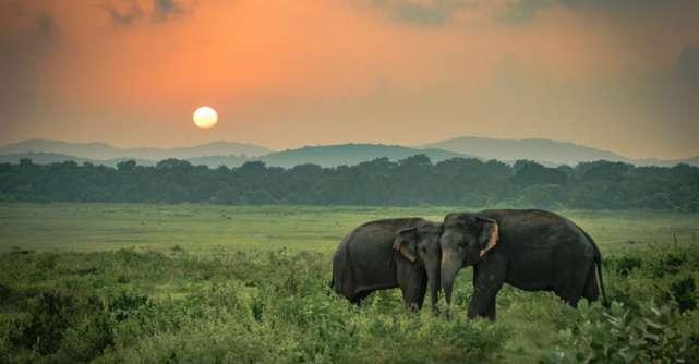 2 Elefanți s-au îmbătat și au adormit într-o plantație de ceai după ce au băut 30 de litri de alcool