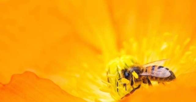 De ce sa consumi produse apicole primavara