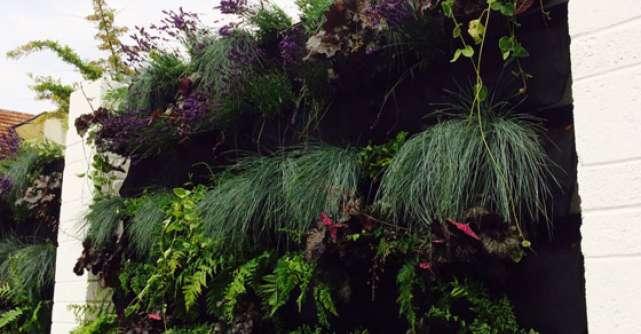 Gradini verticale: coltul din natura in locuinta ta