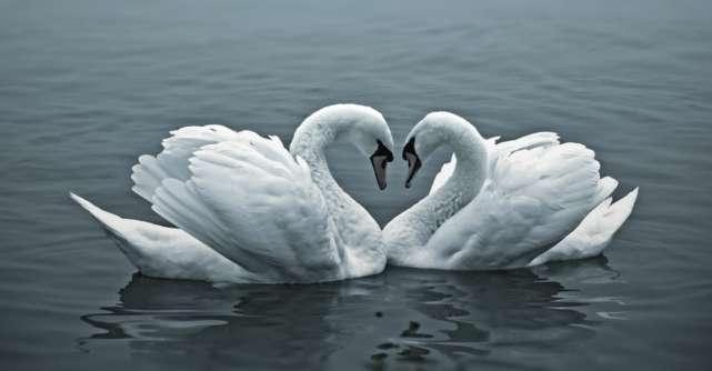 9 Animale minunate care ne pot invata ce inseamna dragostea adevarata
