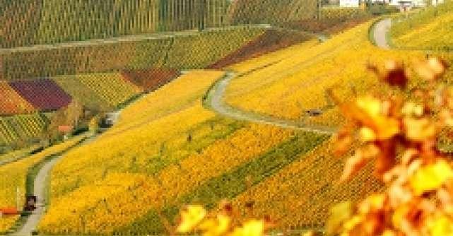 Orasul Stuttgart celebreaza vinul