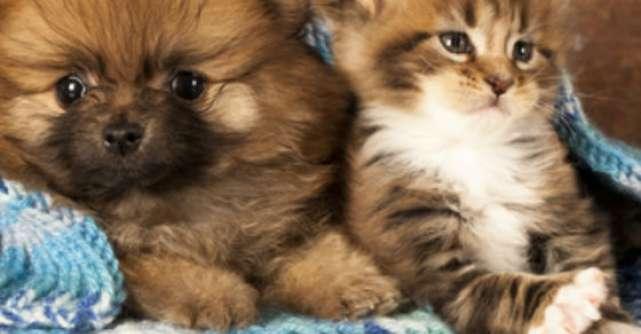 Imagini adorabile cu animale