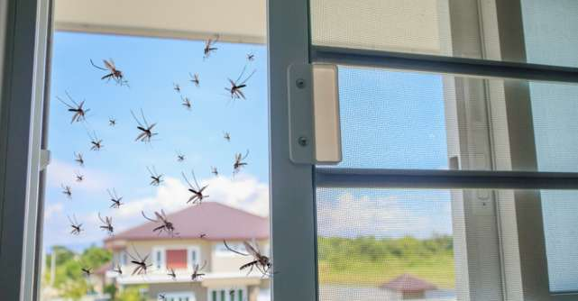 Cum te poți proteja de insecte vara aceasta