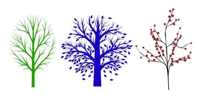 Alege un copac si afla ce ascunde sufletul tau