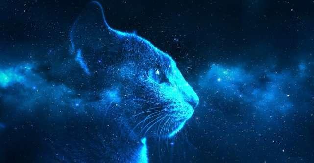 4 Lecții spirituale pe care le învățăm de la pisici