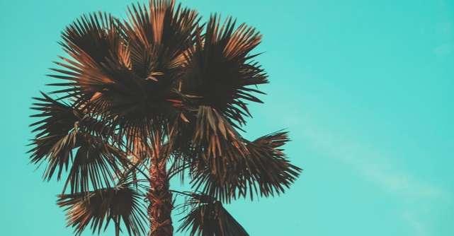 Ulei de palmier: boicot sau sprijin?