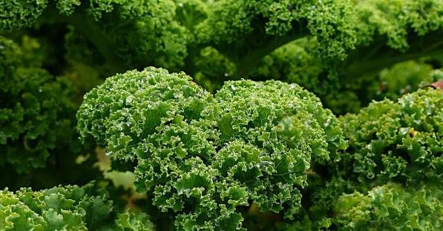 Un efect major al consumului de varza kale, conform unui nutritionist