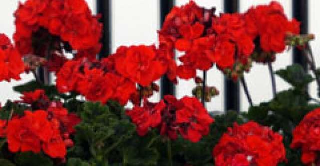 Top 3 flori de apartament