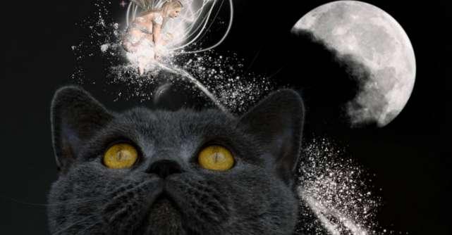 Pisica, animalul magic care iti protejeaza sufletul si casa de energiile negative