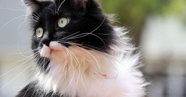 3 trucuri pentru a avea o pisică sănătoasă și fericită