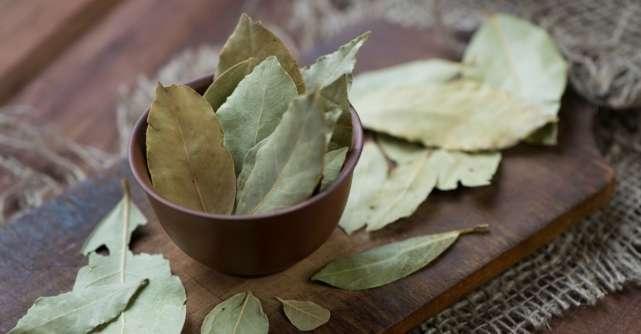 Foile de dafin, condimente preţioase pentru sǎnǎtate