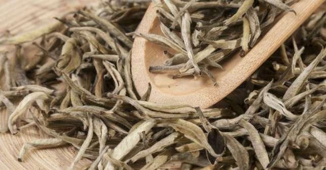 Ceaiul alb: beneficii pentru sănătate