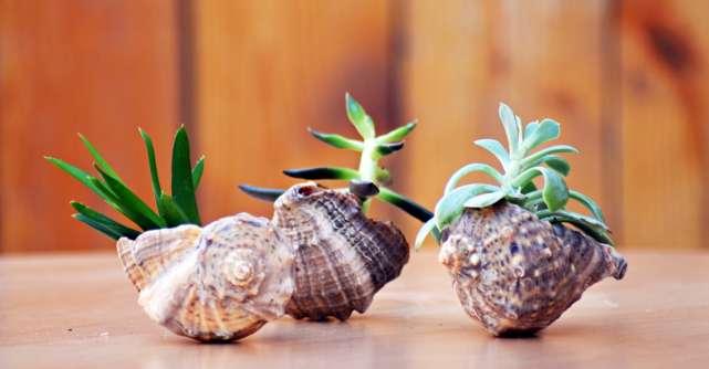 Noutati din IarmaROc: Gradina Zanelor ofera aranjamente din plante si muschi stabilizati