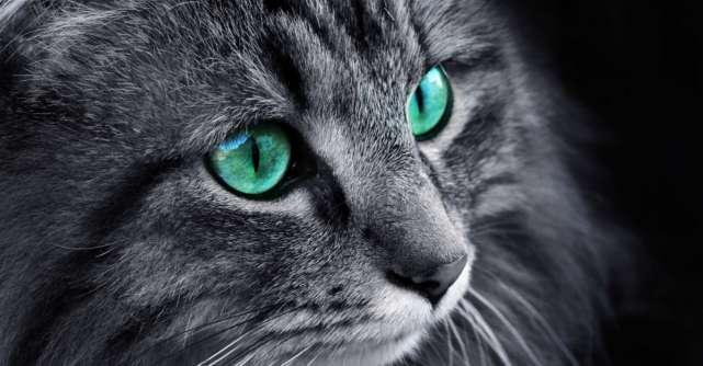 Lumea, așa cum n-ai mai văzut-o: așa funcționează vederea la mai multe animale