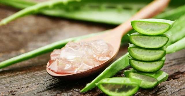 Aloe vera: Beneficii pentru sănătate