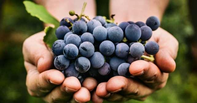 Fructele de toamna. Ce sa mancam in aceasta perioada?
