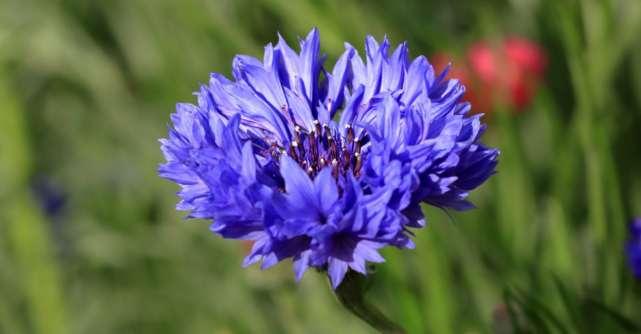 4 flori care fac MINUNI pentru sanatatea ta