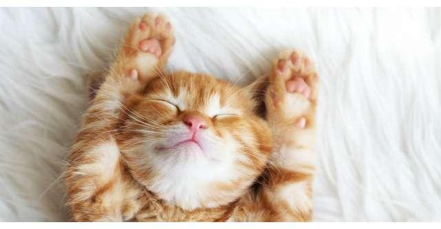 Cum sa dormi mai bine: ghid pentru cresterea calitatii somnului