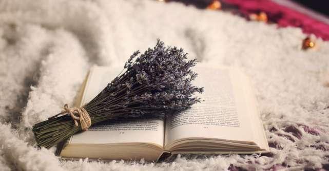 Plante somnifere – ca sa spui adio, insomnie!