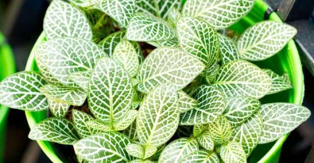 4 plante de interior, pe care nu le poti omori
