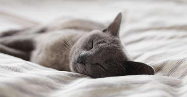 Alimente care stimulează producerea de melatonină, hormonulcare ajută la reglarea ciclului natural de somn