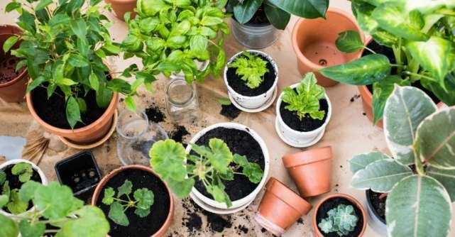 Grădina din bucătărie. Plante aromatice pe care le poţi creşte în casă