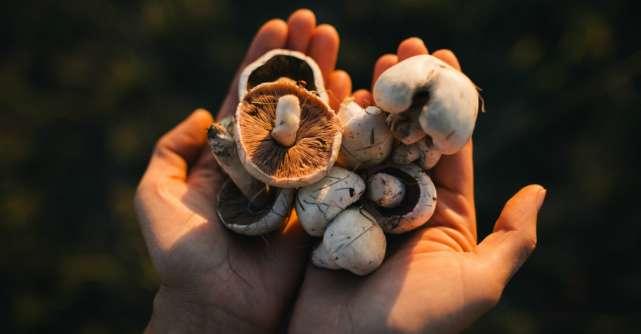 Cum pot fi deosebite ciupercile bune de cele otravitoare?