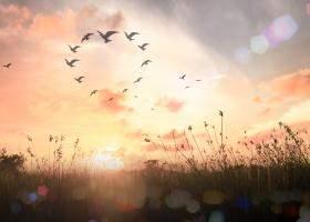 Vibratia saptamanii: EVOLUȚIE și DETERMINARE