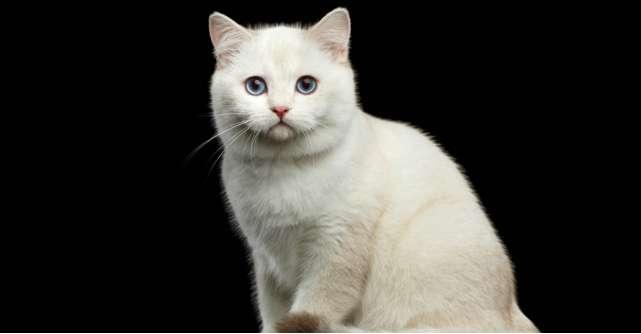 Zodiacul felinelor: Afla ce zodie este pisica ta