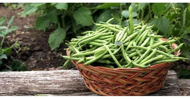 Este una dintre cele mai ieftine legume. Iata ce beneficii aduce sanatatii