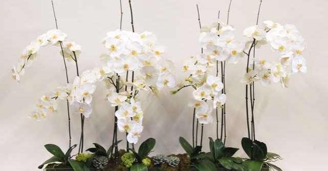 Orhideele, cele mai populare plante