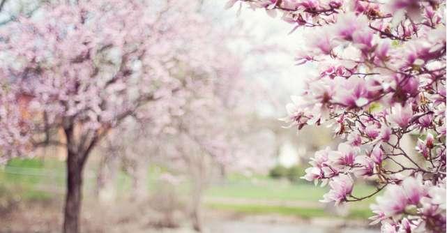 Imagini de Florii si citate frumoase despre flori