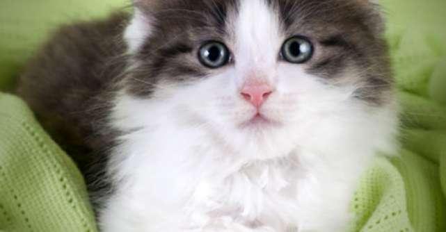 Adorabil! Poze cu pisici