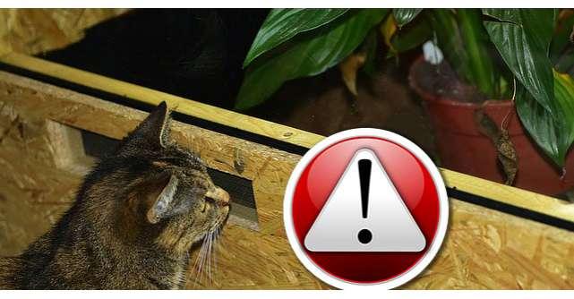 Top 10 surse de Alergeni din casa ta!
