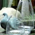 Vaze: Vaze Alicia
