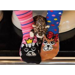 Set de sosete cu pisici in culori de oferit cadou